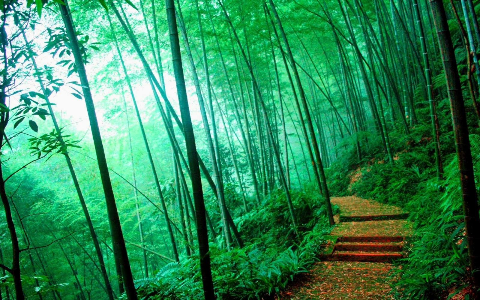 Car In Forrest Hd Wallpaper Bamboo Wallpapers Collections Most Beautiful Places In